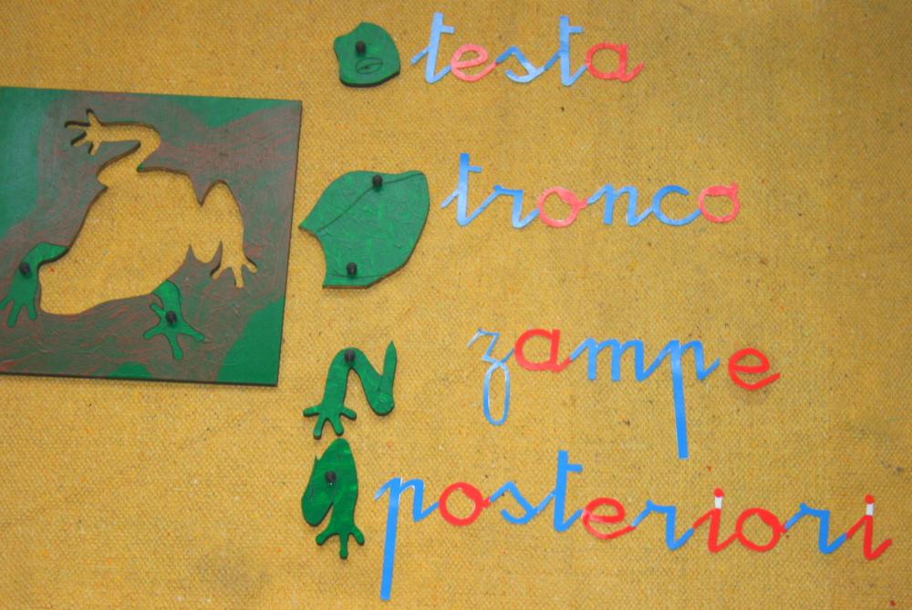 Incastro della rana Montessori