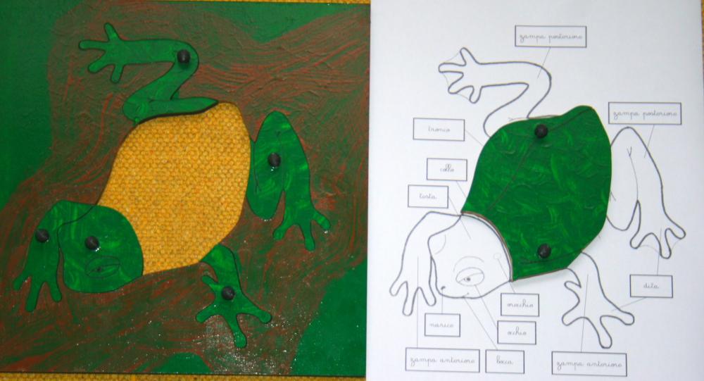 incastro della rana 8