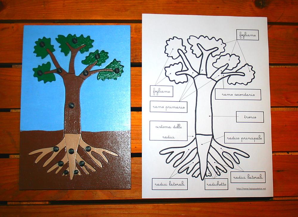 incastro pianta Montessori 15