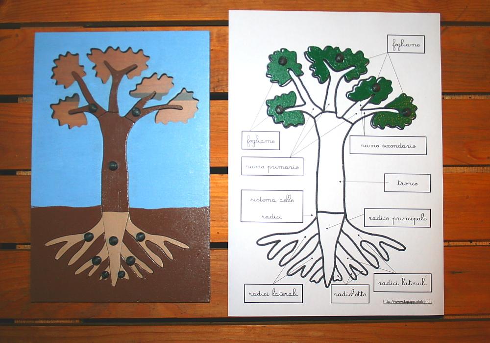 incastro pianta Montessori 16