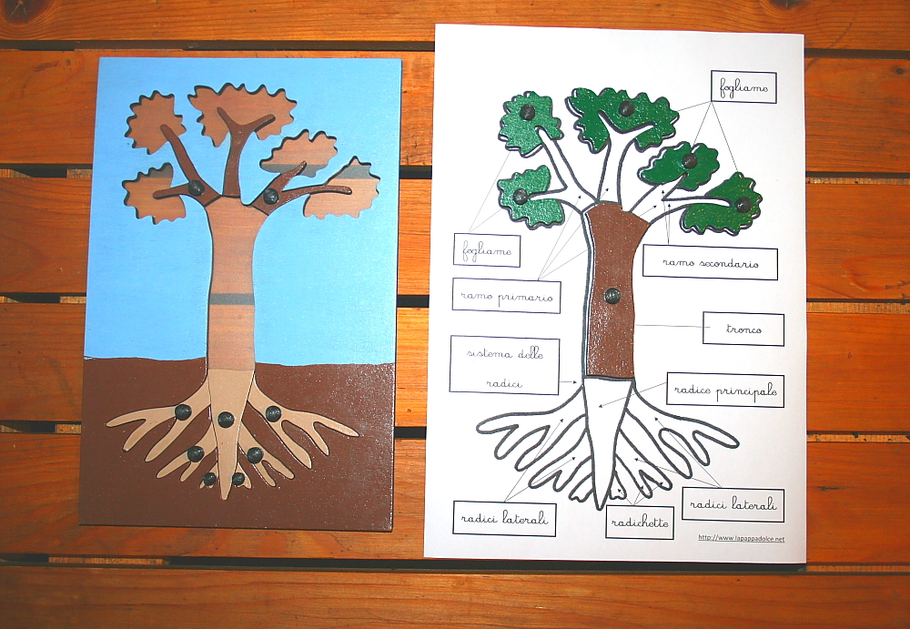 incastro pianta Montessori 17