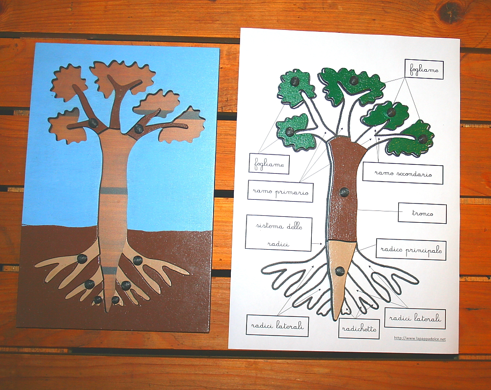incastro pianta Montessori 18