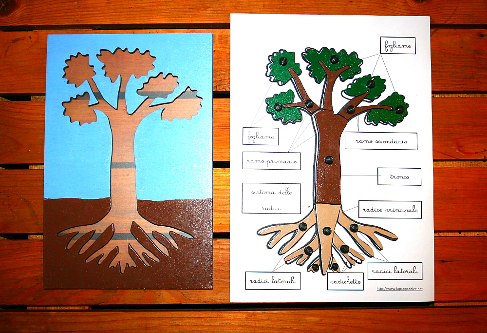 incastro pianta Montessori 19