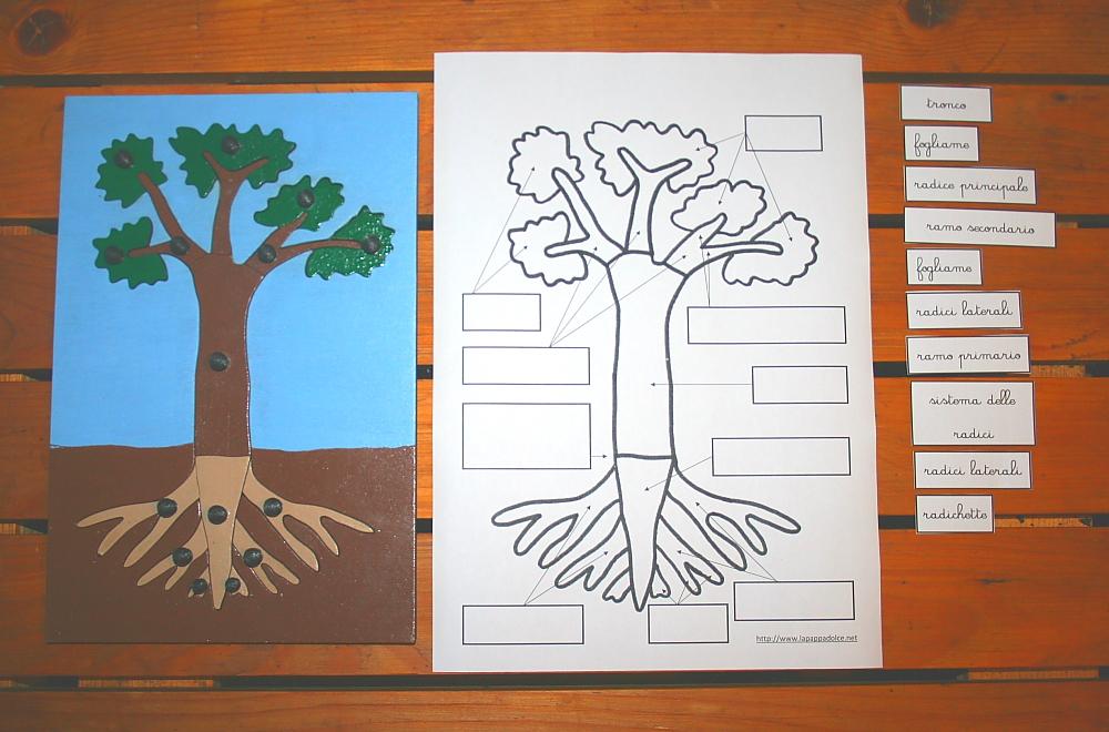 incastro pianta Montessori 20