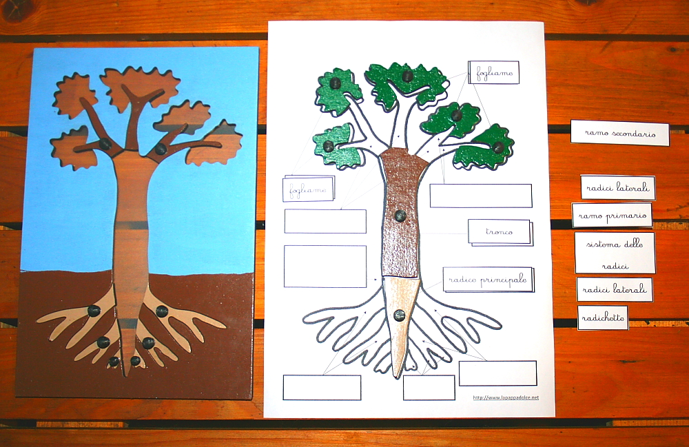 incastro pianta Montessori 22