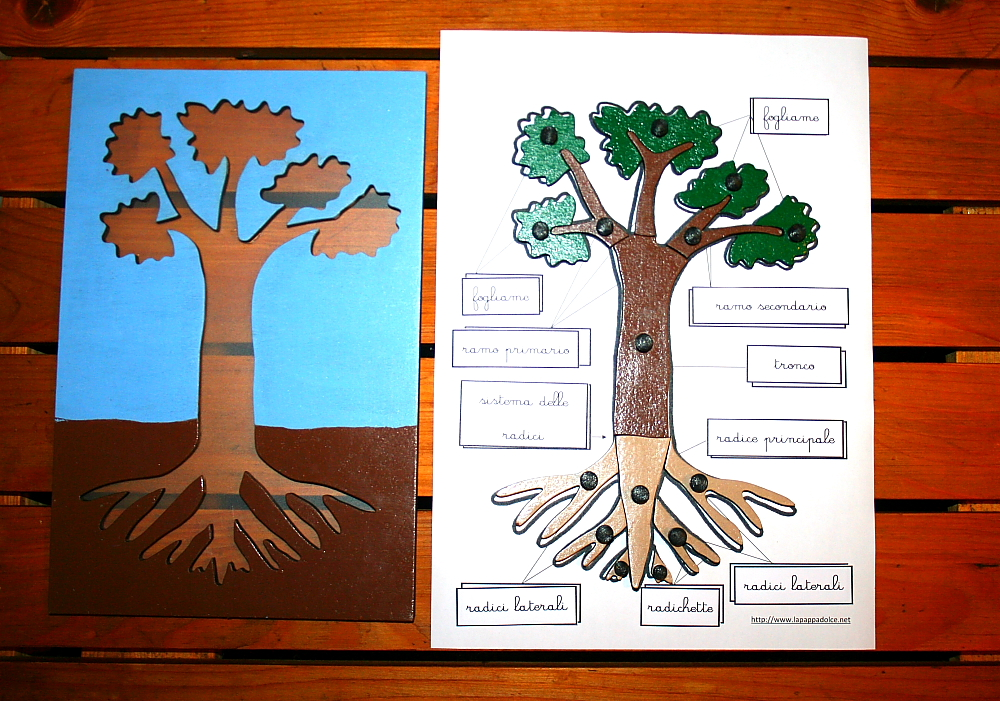incastro pianta Montessori 23