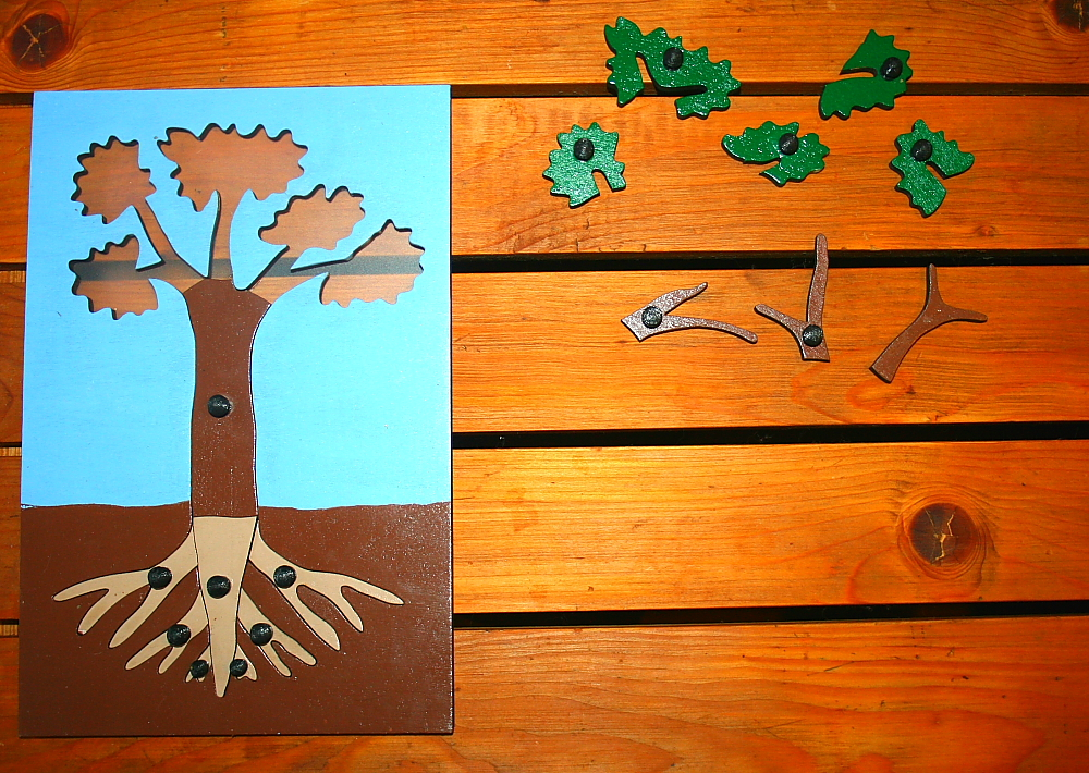 incastro pianta Montessori 5
