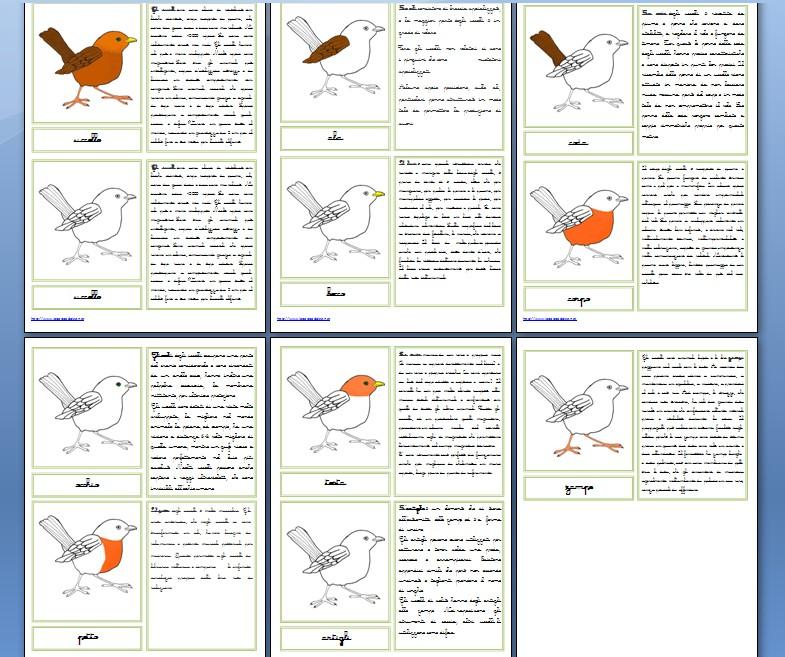 Nomenclature Montessori per le parti dell'uccello