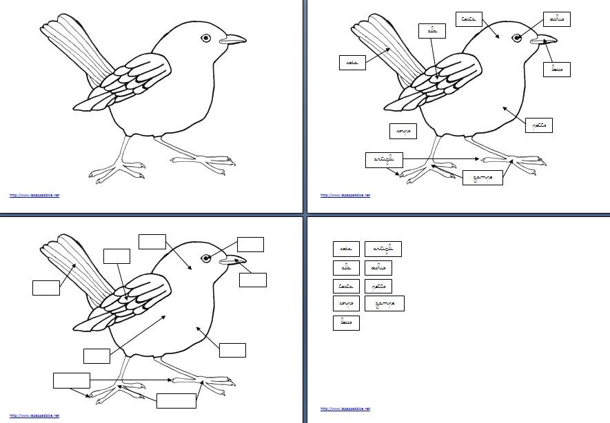 Nomenclature Montessori per le parti dell'uccello per bambini della scuola d'infanzia (immagine, nome, immagine e nome) e per la scuola primaria (immagine, nome, definizione) pronte per il download e la stampa in formato pdf.