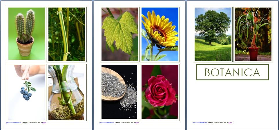 Introduzione alla Botanica col metodo Montessori