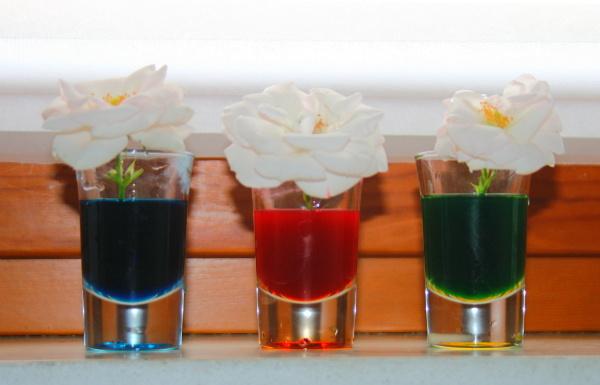 Esperimento scientifico: il pittore delle piante